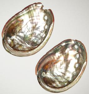 "Abalone Shell for Burning Smudge: 2.5-3"" approx (mini-small)"